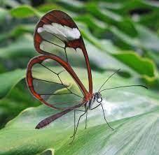 Fatemeh Mohajer