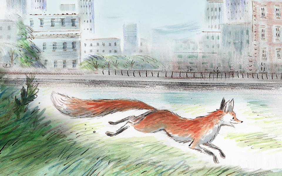 Drawing of Gaspard the Fox