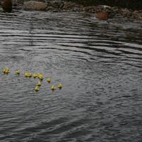 13-7-09-Duck-Race-and-u14-Girls-063