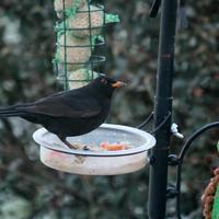 Feeding-Time-049