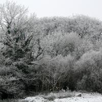 2009-Assorted-025
