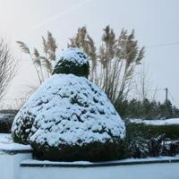 First-Snow-031