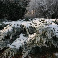 First-Snow-138