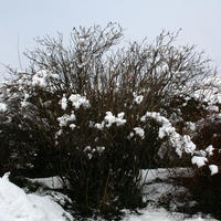 17th-February-Snow-014