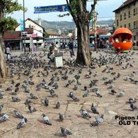 Sarajevo 050