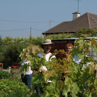 29-Community Garden on 20-07-2013 032