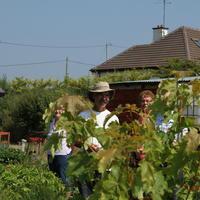 30-Community Garden on 20-07-2013 033