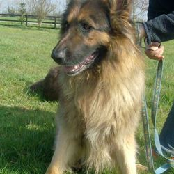 Reunited dog 11 Apr 2009 in cork. Rex has been Rehomed