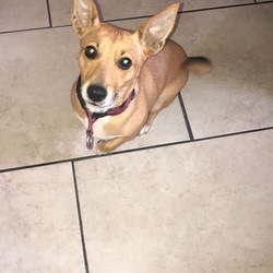 Reunited dog 06 Oct 2017 in Dublin 1. Jack Russell with long dark tail, sandy couloured dog with white from her nose down here neck and belly. Her name is Sandy, she's missing fromDublin City area. Please cal 085-215-0863 if you have any information.
