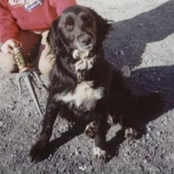 Lost dog on 22 Apr 2009 in Ahenny, South Tipperary/Kilkenny area. Cleo is a 6 year old spaniel/labrador mix.  She is mainly black with some white. She had a red collar. Her family are devastated. Any information to 087 2527395.  A REWARD will be given on Cleos safe return.