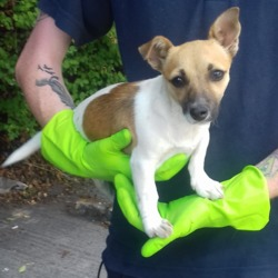 Dog looking for home 27 Jul 2018 in dublin..xx. surrendered needs a home, contact dublin dog pound....Surrendered Date: 26/07/2018