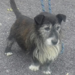 Found dog on 11 Aug 2018 in Lismullen National School Co. Meath . found...STRAY ref 191 Elderly dog found Garlow Cross Lismullen National School Co. Meath Wed 7th August No collar Not Chipped .please call us here 0870973911