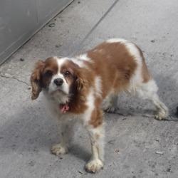 Found dog on 13 Aug 2018 in Gunny Hill Rathfarnham. found, now in the dublin dog pound...Date Found: 10/08/2018 Location Found: Gunny Hill Rathfarnham