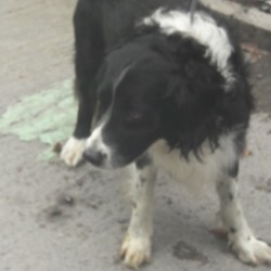 Dog looking for home 14 Aug 2018 in dub. down as surrendered needs a home, contact dublin dog pound...Date Found: