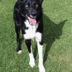 Found dog on 17 Aug 2018 in near summerhill . found...Meath Dog Shelter 3 hrs · This happy girl was picked up near summerhill this morning, she is very friendly, loves to play fetch, good with dogs, any information please contact us on 0870973911