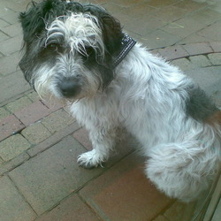 Found dog on 14 May 2009 in Saggart/Citywest. Found