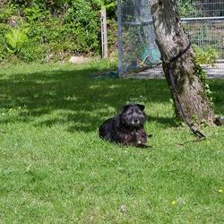 Reunited dog 19 May 0009 in Killarney, Co Kerry. reunited.