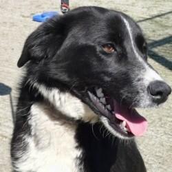 Reunited dog 02 Jun 2009 in Galway, Ireland. Dee has been homed! www.galway-spca.com