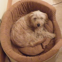 Lost dog on 13 Jun 2009 in Bettystown, Co. Meat3. Female dog about 18 months old. Wheaten colour. Very friendly. Answers to name of