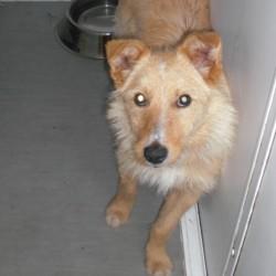 Reunited dog 18 Jun 2009 in Galway, Ireland. Jazz has been homed! www.galway-spca.com