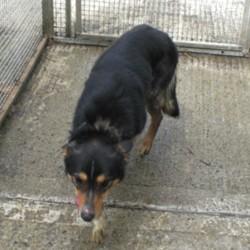 Reunited dog 18 Jun 2009 in Galway, Ireland. Sonny has been homed!  www.galway-spca.com