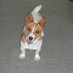 Reunited dog 23 Jun 2009 in Galway, Ireland. Cher has been homed! www.galway-spca.com
