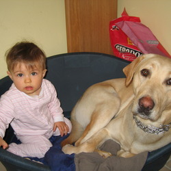 Reunited dog 26 Jun 2009 in kinvara and ballyvaghan. 2 years old.golden labrador very quite and friendly dog miss home lost between kinvara and ballyvaghan at friday if anyone know where he is let me know please no 0851587638