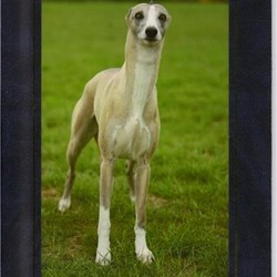 Reunited dog 01 Aug 2009 in Killiney Area, South Dublin. NO LONGER MISSING