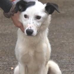 Reunited dog 05 Aug 2009 in Galway, Ireland. Summer has been homed. www.galway-spca.com