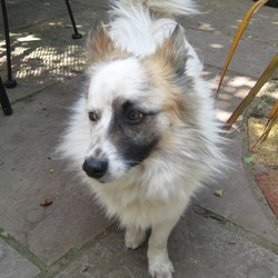 Found dog on 05 Aug 2009 in ballymun. small 2 year old approx
