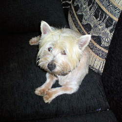 Found dog on 09 Aug 2009 in The Swan, Co Laois.. He came home after 6 days.