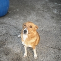Found dog on 09 Aug 2009 in Galway. Female terrier x. Had pups recently. Beautiful dog, lovely nature. Very friendly. Must be missed by owner. Call 087 612 2911