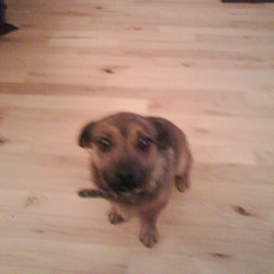 Lost dog on 12 Aug 2009 in Newcastle/Rathcoole Co.Dublin. Small brown female jack russell cross.Nuetered with long tail.Wearing pink leopard print collar.Answers to 'teddy'.Lost in newcastle/rathcoole