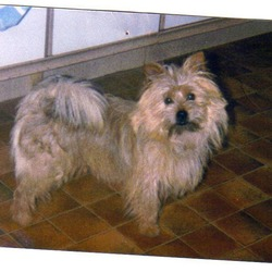 Lost dog on 11 Aug 0009 in Laois. Small Yorkshire terrier/Shitzu mix male aged 14 lost over a week ago in Portlaoise. His name is Rambo and he has a black collar on. He's a treasured family pet and any info would be greatly appreciated.