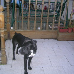Reunited dog 26 Aug 2009 in Artane. Rocky has been re-united with his owner