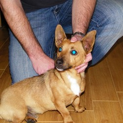 Reunited dog 31 Aug 2009 in Kildare Town. Jack Russell. Hit by car but fine now after Vets check. Junction of Monasterevin/Nurney Roads (up from Modus/Kildare Village Outlet). Well behaved, issing owner. Contact: 086 826 5048
