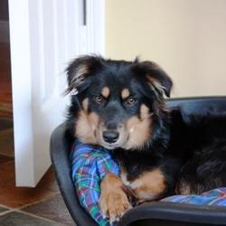 Reunited dog 18 Sep 0009 in New Ross, Co. Wexford. Rehomed