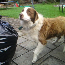 Reunited dog 07 Sep 2009 in galway. rehomed