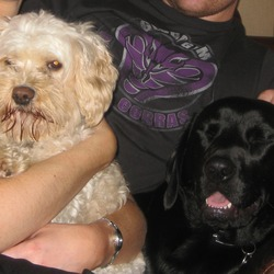 Lost dog on 04 Sep 2009 in kildare. 2 dogs lost from curragh end of kildare town Black lab Jake and white bichon cross charlie BIG REWARD offered 087-7775620
