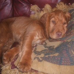 Lost dog on 01 Sep 2009 in Co Fermanagh, in Northern Ireland. This is Pinky, lost since 1st September. Contact 028 66 388 822 and 07743360945. Pinky has a pink nose , pink paws and a very pink mouth, which is highly unusual and not common.