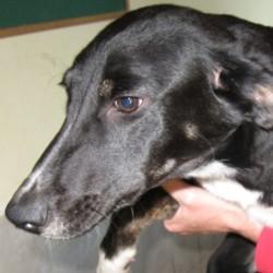 Reunited dog 03 Oct 2009 in Galway, Ireland. Archie has been homed! www.galway-spca.com