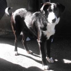 Reunited dog 03 Oct 2009 in Galway, Ireland. Bingo has found a home! www.galway-spca.com