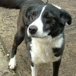 Reunited dog 28 Jun 2010 in Rainbow Bridge. Sam RIP  www.galway-spca.com