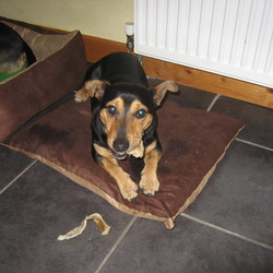 Reunited dog 18 Mar 2009 in Park West Dublin 12. Shadow was reunited with his owner, hooray!  2 Weeks.