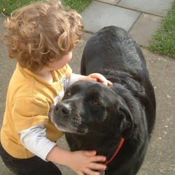 Lost dog on 27 Oct 2009 in Donabate, Co Dublin. Black labrador called Murphy, lost in Turvey Avenue, Donabate on Wednesday 27th October.  He has a red collar, red bone medal and he is chipped. He very friendly.  Please ring liz 0868676089