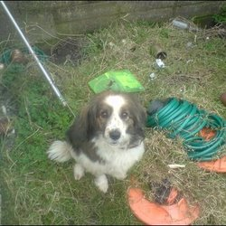 Reunited dog 31 Oct 2009 in tymonville, tallaght. medium sized collie cross, last seen halloween  night in tallaght.she is well loved and missed already, her name is lucky, call stephen on 0857837436 if you seen her or can help locate her as her family miss her. Reunited!