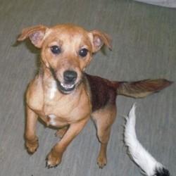 Reunited dog 03 Nov 2009 in Galway, Ireland. Gloria has been homed! www.galway-spca.com