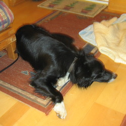Reunited dog 13 Nov 2009 in Upper Hills, Gorteen, Castlecomer, Co. Kilkenny. Black & White collie mix, tall, thin, wearing collar, no tags, house trained, seems to be very much loved, good with dogs & cats, affectionate
