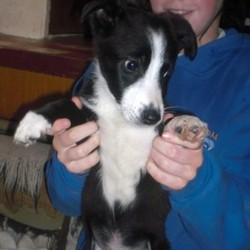 Reunited dog 20 Nov 2009 in Galway, Ireland. Domino has been homed! www.galway-spca.com