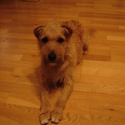 Reunited dog 28 Nov 2009 in Dublin. Happily reunited with his family